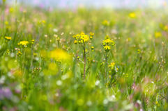 Abstract dreamy beautiful sunny meadow with flowers background Royalty Free Stock Photography