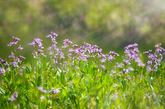Abstract dreamy beautiful sunny meadow with flowers background Royalty Free Stock Images