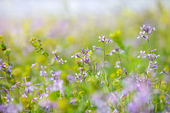 Abstract dreamy beautiful sunny meadow with flowers background. With soft blurs bokeh royalty free stock images