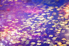 Abstract and dreamy image of water lilies on the pond Stock Images