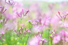 abstract dreamy photo of spring wildflowers Royalty Free Stock Photos
