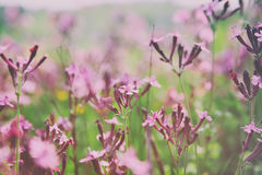 abstract dreamy photo of spring wildflowers Stock Photo