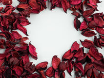 Abstract with dried red petals on white background. Abstract texture with heart of dried petals Royalty Free Stock Photo