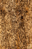 Abstract Driftwood Background Texture - worn, battered, natural Stock Photos