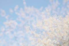 Abstract dromerig en vaag beeld van de bloesemsboom van de de lente witte kers Selectieve nadruk Stock Afbeeldingen