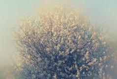 Abstract dromerig en vaag beeld van de bloesemsboom van de de lente witte kers Selectieve nadruk Gefiltreerde wijnoogst Stock Afbeelding