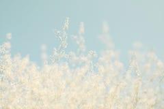 Abstract dromerig en vaag beeld van de bloesemsboom van de de lente witte kers Selectieve nadruk Gefiltreerde wijnoogst Royalty-vrije Stock Foto
