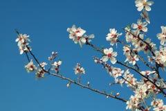 Abstract dromerig en vaag beeld van de bloesemsboom van de de lente witte kers Selectieve nadruk Gefiltreerde wijnoogst Stock Foto