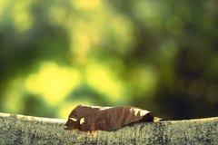Abstract droog blad op tak die als achtergrond gebruiken Royalty-vrije Stock Afbeelding