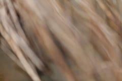abstract droog gebiedsgras na het onweer Stock Foto's
