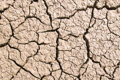 Dry cracked earth background Stock Image