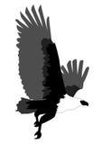 Abstract Eagle die in zwart-wit op witte achtergrond vliegen; macht en sterkte Stock Afbeeldingen