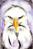 Abstract eagle watercolor painting Royalty Free Stock Image