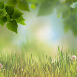 Abstract eco backgrounds with green foliage Royalty Free Stock Photo