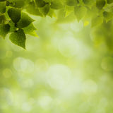 Abstract eco and environmental backgrounds Stock Images