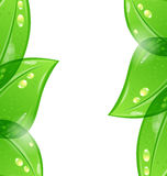 Abstract eco green background Royalty Free Stock Images