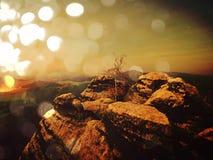 Abstract effect Dromerig die landschap in dikke mist wordt verloren Fantastische ochtend die door zacht zonlicht gloeien, Stock Afbeelding