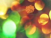 Abstract effect Het eerste kleurrijke blad falen in bergrivier Grint en van de keienblaasbalg duidelijk koud water, Royalty-vrije Stock Foto