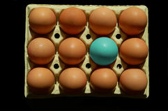 Abstract egg in blue. Blue egg amongst normal eggs on black background Royalty Free Stock Image