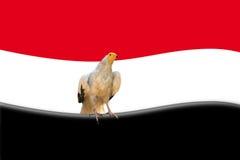 Abstract egyptian flag. Real eagle inside egyptian flag Stock Photography