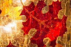 Abstract Eiken Bladdetail op Glas Royalty-vrije Stock Fotografie
