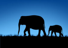 Abstract of Elephant family. Elephant family silhouettes in Asian forest Royalty Free Stock Photo