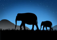 Abstract of Elephant family. Elephant family silhouettes in Asian forest Stock Image