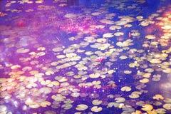 Abstract en dromerig beeld van waterlelies op de vijver Stock Afbeeldingen