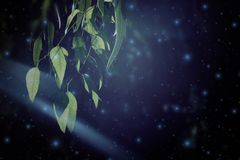 Abstract en magisch beeld van Glimworm die in het concept van het nacht bossprookje vliegen Royalty-vrije Stock Afbeelding