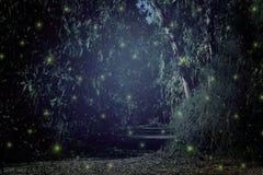 Abstract en magisch beeld van Glimworm die in het concept van het nacht bossprookje vliegen Stock Foto's
