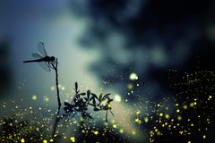 Abstract en magisch beeld van libelsilhouet en Glimworm die in het concept van het nacht bossprookje vliegen Royalty-vrije Stock Fotografie