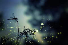 Abstract en magisch beeld van libelsilhouet en Glimworm F royalty-vrije stock fotografie