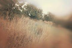 abstract en surreal herfst dromerig beeld van bos Royalty-vrije Stock Fotografie