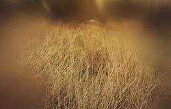 abstract en surreal herfst dromerig beeld van bos Stock Afbeeldingen