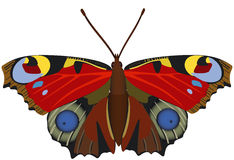 Abstract exotic butterfly. Stock Photo