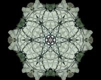 Abstract extruded mandala 3D illustration. Black, green and white. Extruded mandala. 3D illustration. Abstract shapes. Six sided star Stock Photography