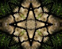 Abstract extruded mandala 4 sided star. Green, brown and black. Extruded mandala. Abstract shape. Four sided star Royalty Free Stock Image