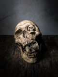 Abstract face of skull. Royalty Free Stock Image