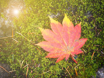 Abstract fall autumn leave in Japan Royalty Free Stock Photography