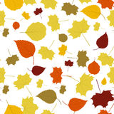 The abstract fall background. The autumn background made out of falling leaves Stock Photography