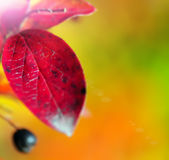 Abstract fall  background Royalty Free Stock Photography