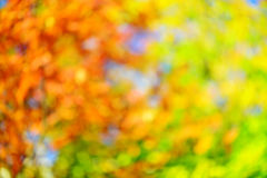 Abstract fall background Stock Images