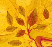 Abstract fall background Stock Photos
