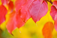 Abstract fall leaf  background Stock Images