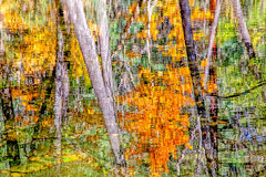 Abstract Fall Reflection Royalty Free Stock Images