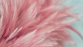 Abstract feather stock photography