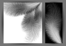 Abstract feather background Royalty Free Stock Photo