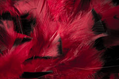 Abstract Feather Background Royalty Free Stock Photography