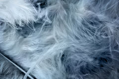 Abstract feathers Stock Photo
