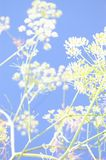 Abstract Fennel Stock Images